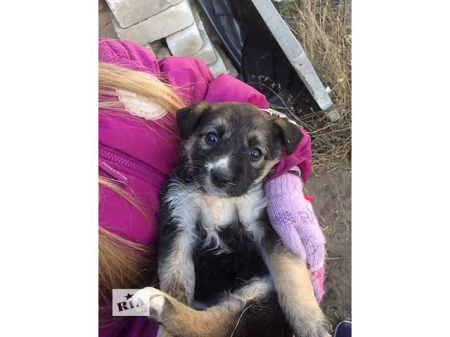 купить бу Дворянские щенята любящим хозяевам КИЕВА!! в Ровно