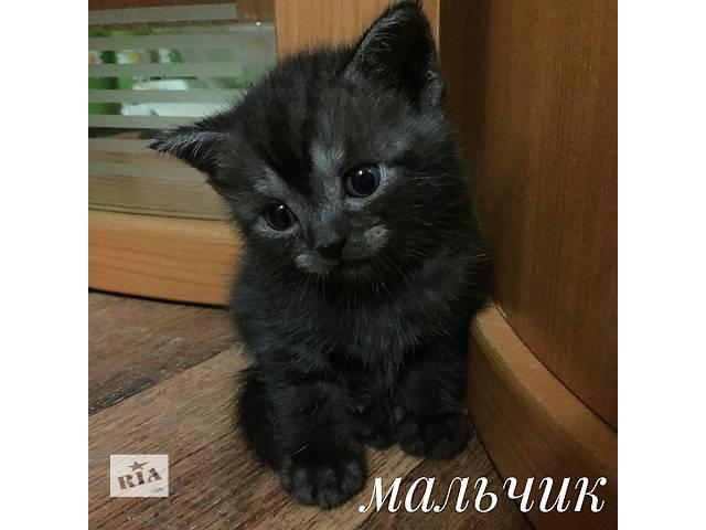 Дымчатый котеночек- объявление о продаже  в Харькове