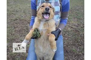 Диша    -собака с душой