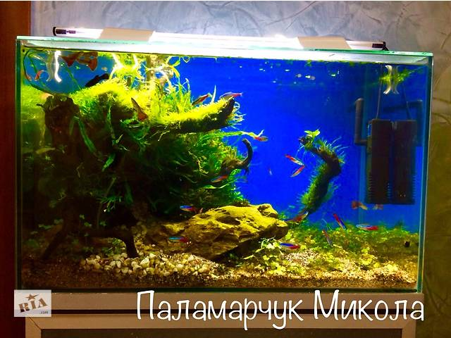 Продаю кораллы !!!дизайн.обслуживание на фото мои работы- объявление о продаже  в Виннице