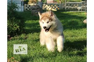 бу Собаки, щенки в Мелитополе Вся Украина