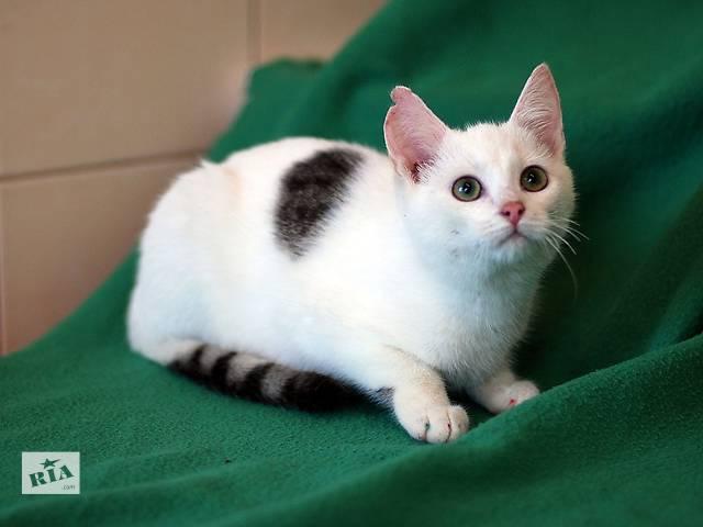 Ёрик, котенок с прекрасными глазами.- объявление о продаже  в Киеве