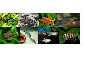 Мирные рыбки
