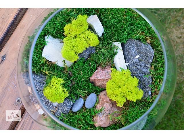 купить бу Флораріум з стабілізованого моху. Акція всим подарунок. Healthy Plants  в Киеве