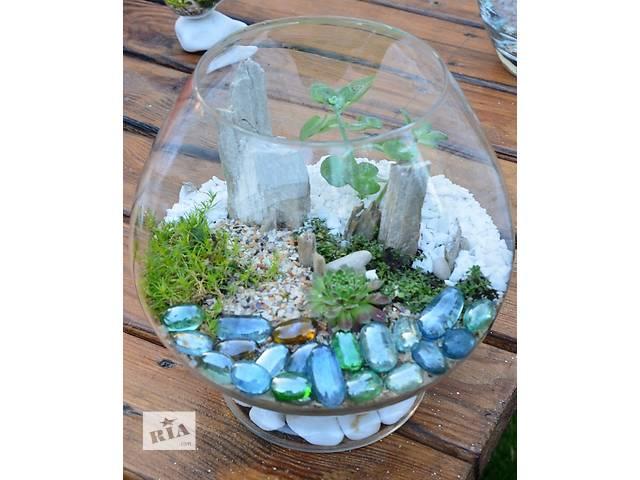 продам Флорариум с суккулентами (композиция из живых растений) . Акция  бу в Киеве