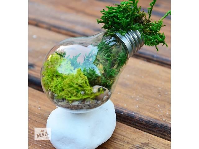 купить бу Флорариум с суккулентами (композиция из живых растений) . Лампочка  в Киеве