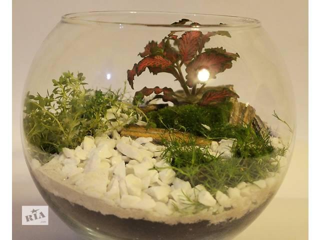 Флорариум с суккулентами (композиция из живых растений) . - объявление о продаже  в Киеве