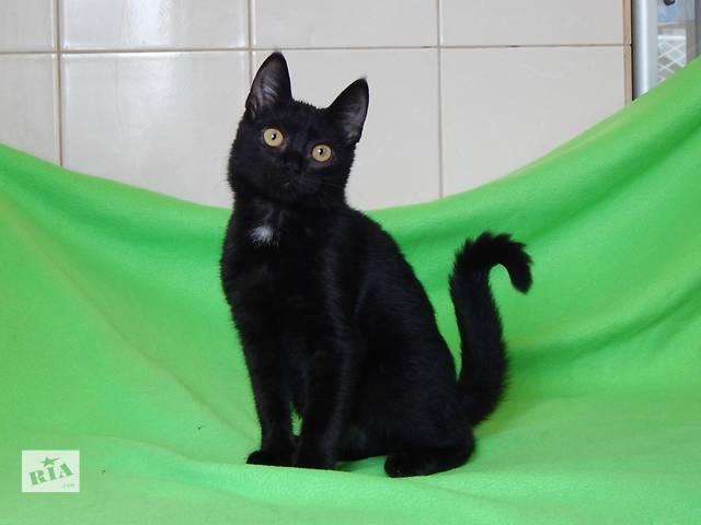 продам Фордик, пятимесячный котик с янтарными глазами. бу в Киеве