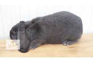 Другие животные в Мариуполе - объявление о продаже Вся Украина