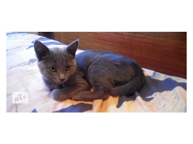 продам Голубой котёнок в добрые руки  бу в Киеве