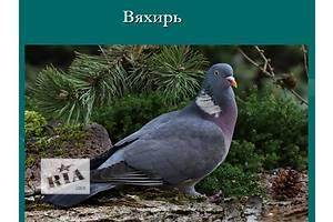 Объявления Птицы