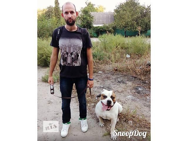 продам Качественные услуги для собак: выгул,дрессировка, хендлинг бу в Днепре (Днепропетровске)