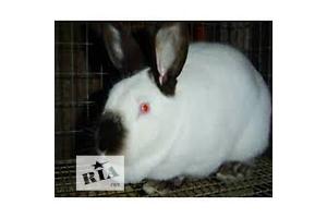 купить бу Кролик Вся Україна