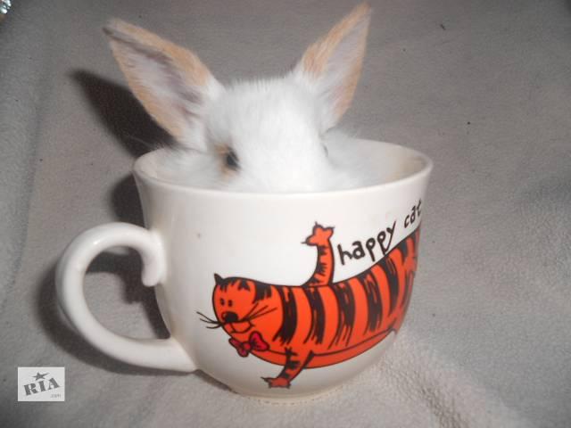 Карликовые крольчата почти даром- объявление о продаже  в Харькове