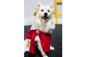 Карнавальный костюм для собак