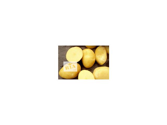 бу Картофель семенной Ривьера, Тирас и другие сорта. в Виннице