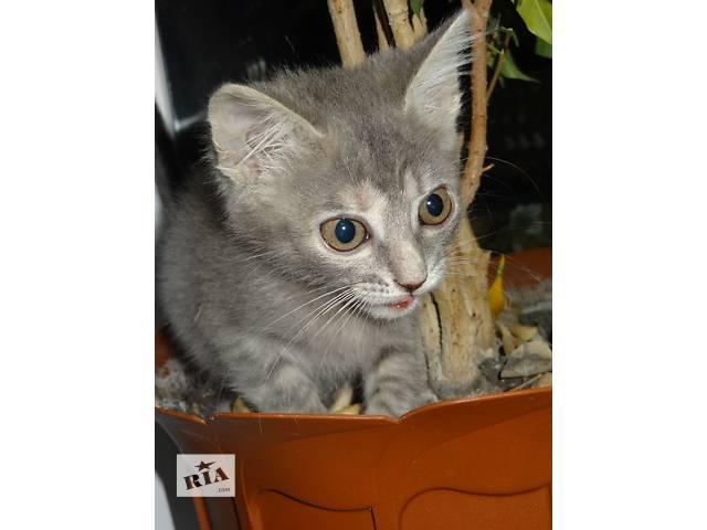 Хорошенькие и умные котята- объявление о продаже  в Киеве