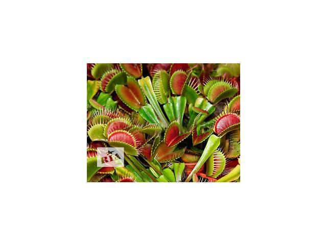бу Хищные растения, росянка, мухоловка, непентес, саррацения в Каменском (Днепродзержинске)