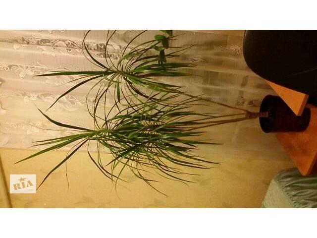 продам Комнатные растения, рассада и цветы бу в Запорожье