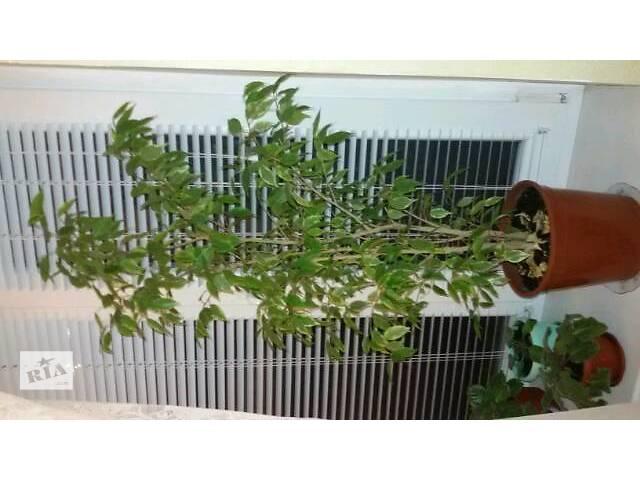 бу Комнатные растения, рассада и цветы в Запорожье