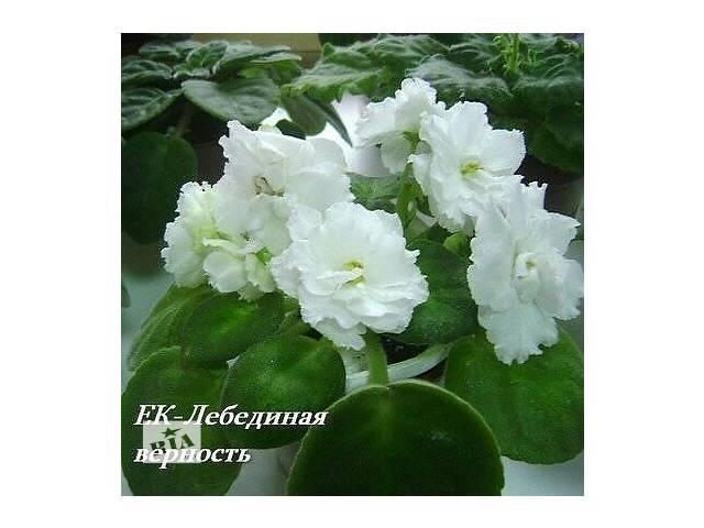 Комнатные растения, рассада и цветы- объявление о продаже  в Ровно
