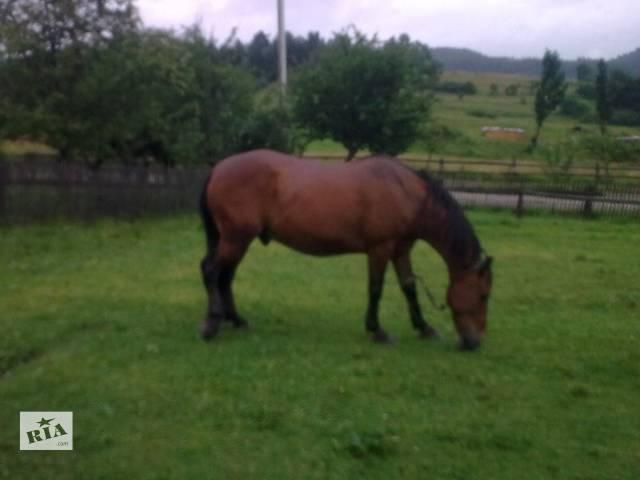 продам Конь(лошадь), конь бу в Сосновке