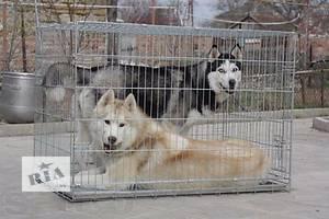 Клетка для собак 2 двери 108х72х82 см (+доставим бесплатно)
