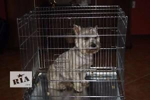 Клетка вольер для собак