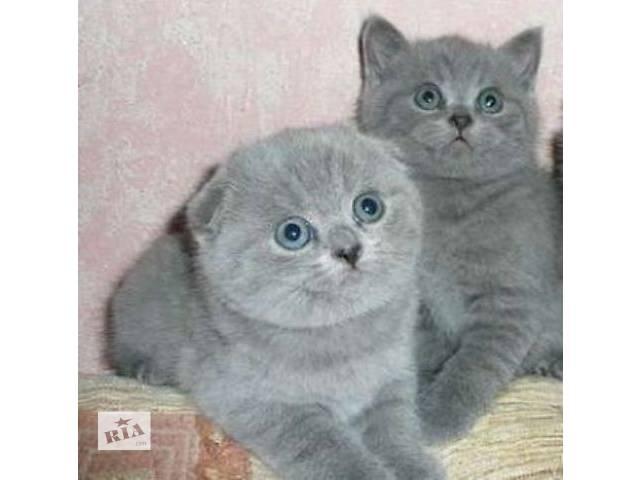 купить бу Клубные котята для тех, кто ценит качество в Харькове