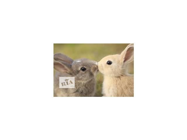 Комбикорм для кролей тм Мультигейн- объявление о продаже  в Киеве