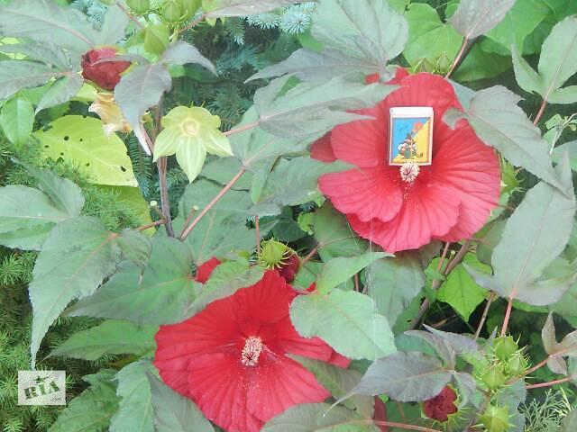 Комнатные растения, рассада и цветы- объявление о продаже  в Белой Церкви