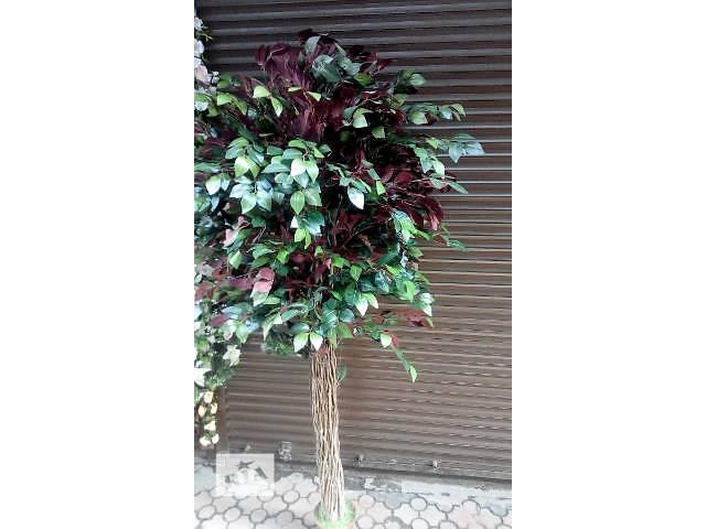 бу Комнатные растения, рассада и цветы в Днепре (Днепропетровске)