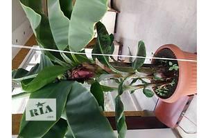 Новые Субтропические растения
