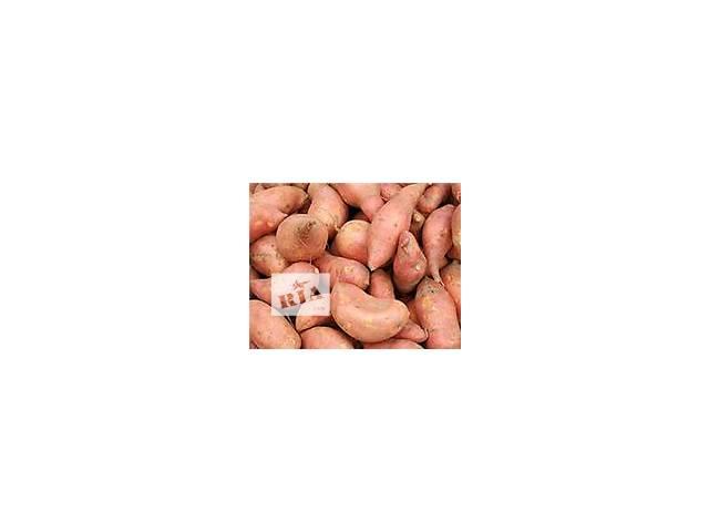 купить бу Батат корнеплоди, картопля. в Полтаве
