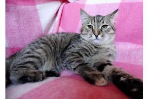 Кошечка Анфиса ищет дом!