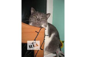 Кошечка Баста ищет  дом и любящую семью