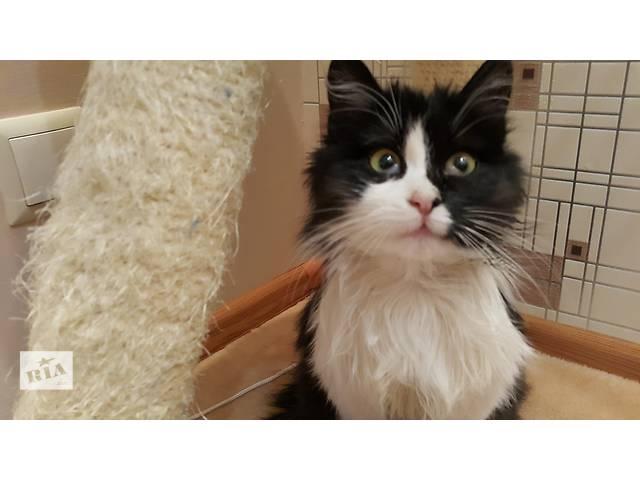 купить бу Кошечка ищет дом в Хмельницком