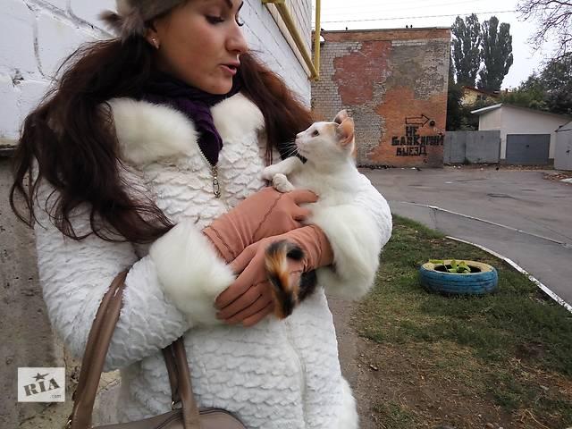 купить бу Кошечке нужен дом в Виннице