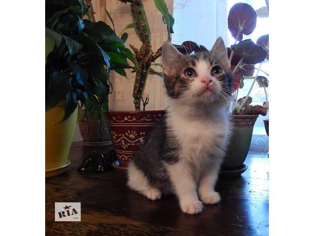 Котята бесплатно- объявление о продаже  в Ивано-Франковске
