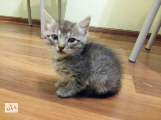 купить бу Кошенята даром в Черновцах