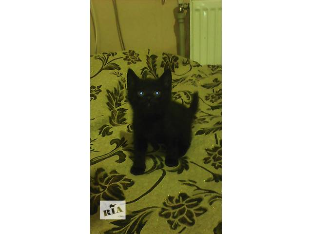 Котята в добрые руки!- объявление о продаже  в Тернополе