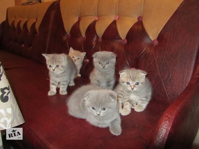 бу кошенята в Тернополе
