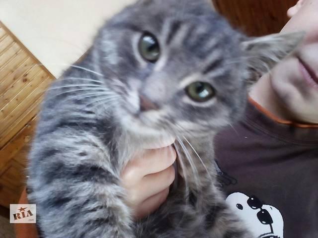Котеночек в добрые руки- объявление о продаже  в Ивано-Франковске