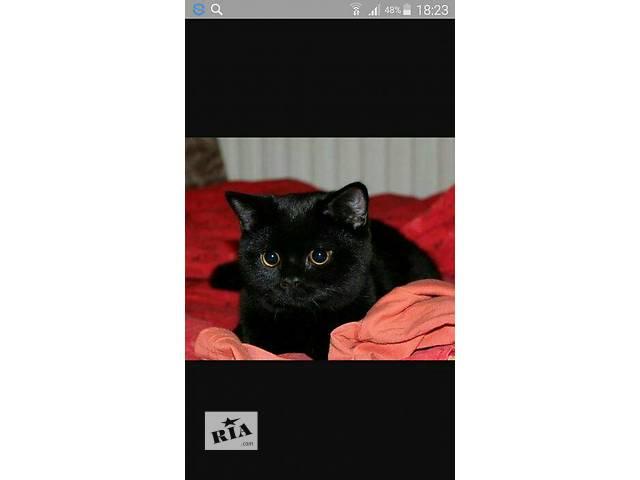 бу Кошки, коты, котята в Полтаве