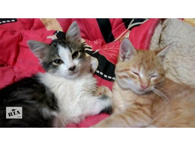 купить бу Кошки, коты, котята в Павлограде