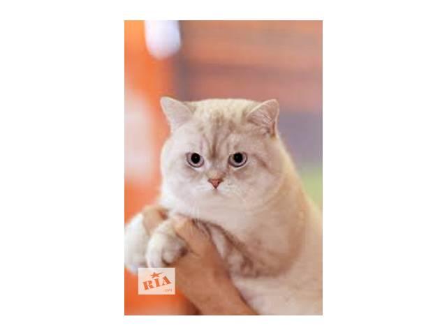 купить бу Кот для вязки. в Донецке