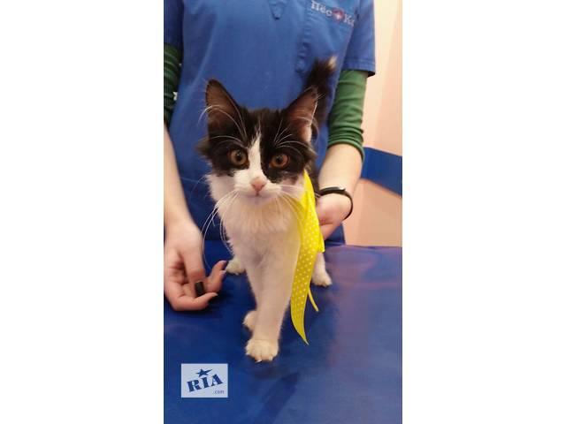 бу котенок девочка ищет дом в Харькове