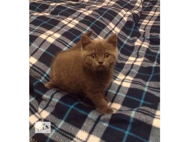 купить бу котенок для всей семьи в Виннице