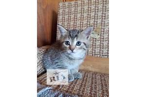 Котенок. Кошечка 1 месяц.
