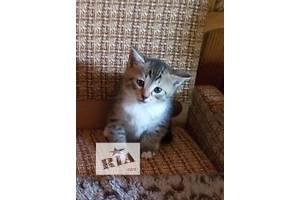 Котенок. Мальчик 1 месяц